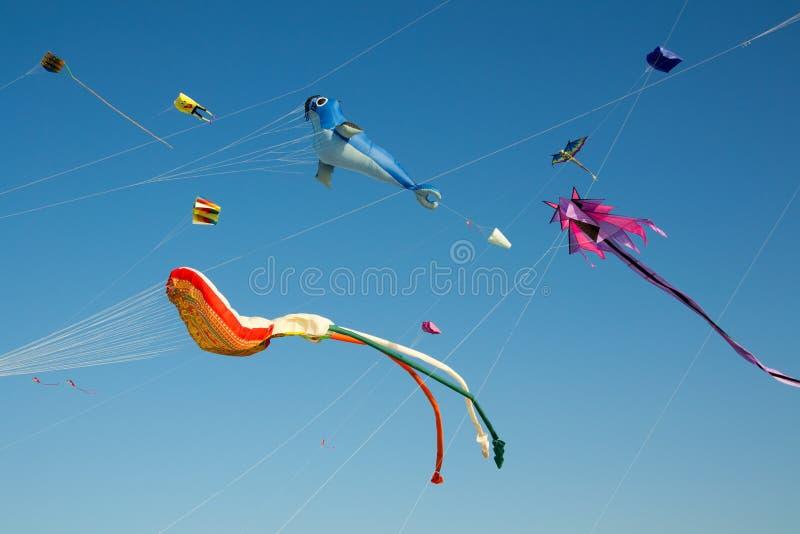 kites fotografia stock