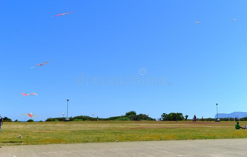 Kites in the Park in summer stock photos