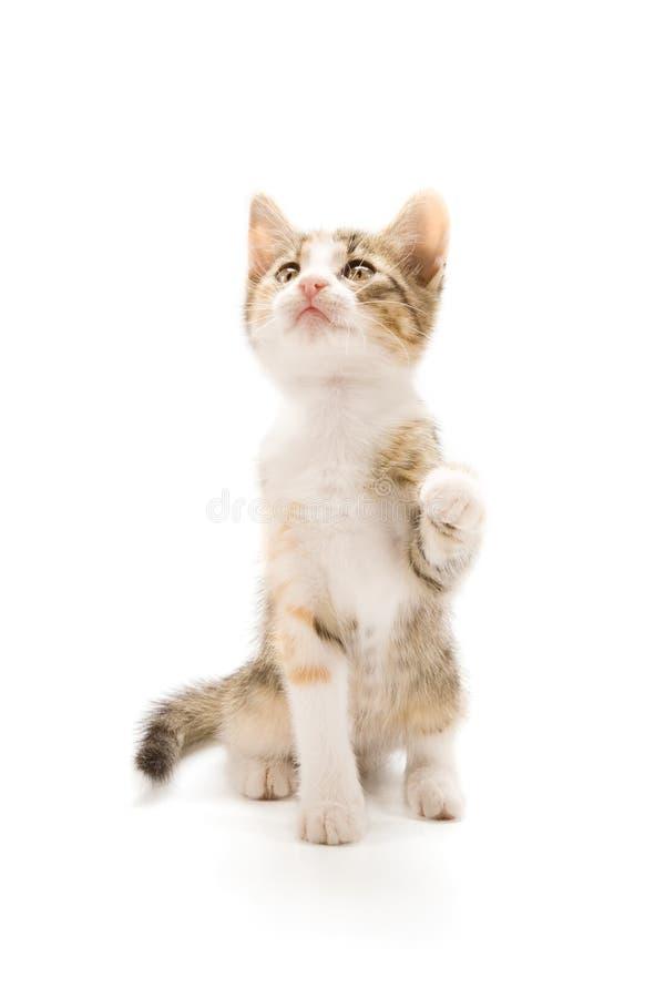 Kitten. Photo of a cute kitten isolated on white stock photos