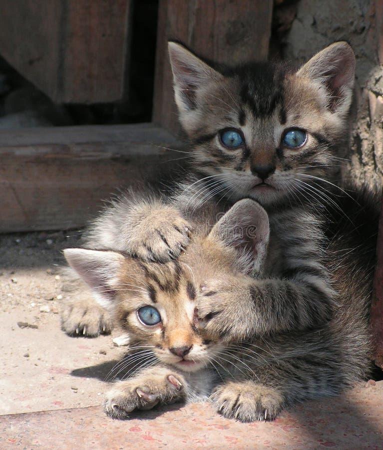 Kitten. Two kittens