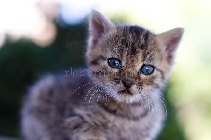 Kitten. Shot with 50mm lens at f/2 royalty free stock images
