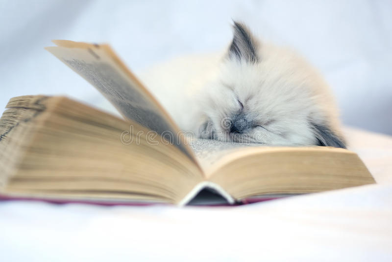 Kitten. Lovely kitten sleeping on book stock photos