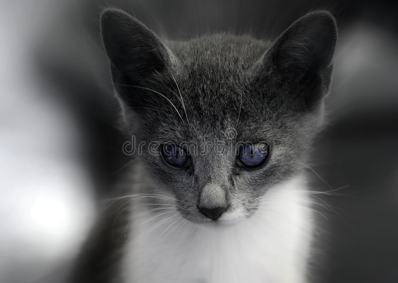 Download Kitten Stock Photography - Image: 1342902