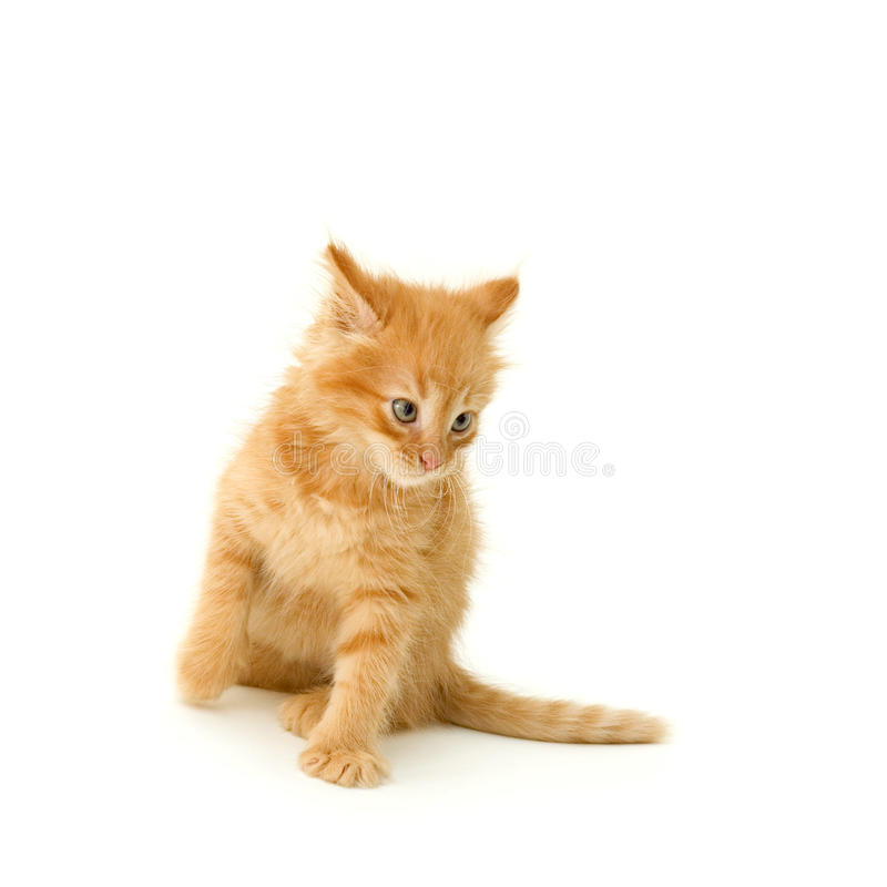 Download Kitten stock image. Image of angry, hunting, fuzzy, kitty - 14706663