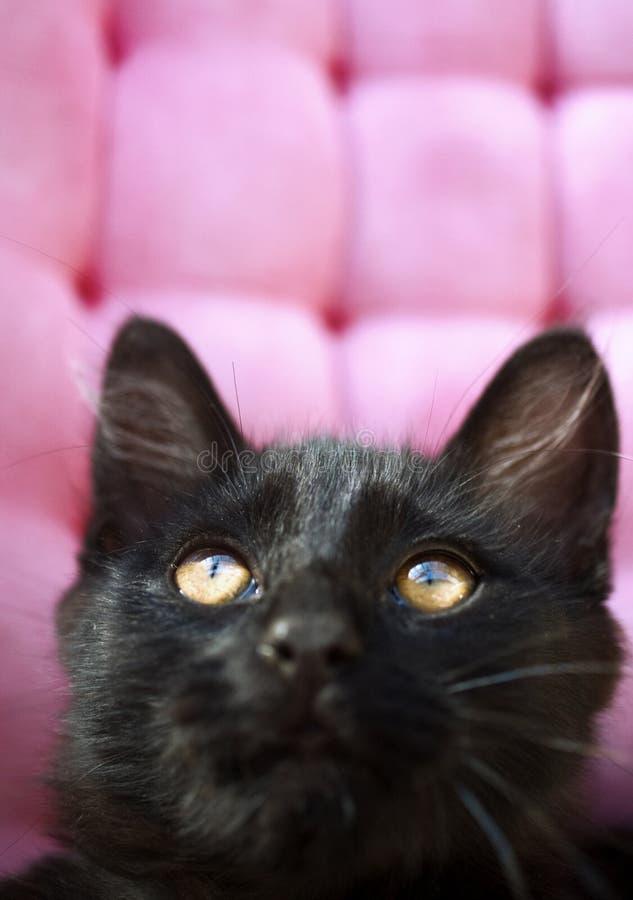 Kitten. Portrait, black cat, focus on eyes stock image