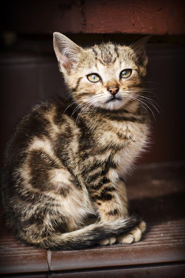 Free Kitten Stock Image - 15753751