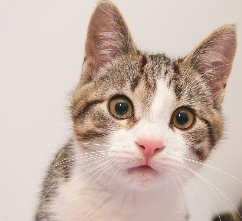 Free Kitten Stock Photo - 1595580