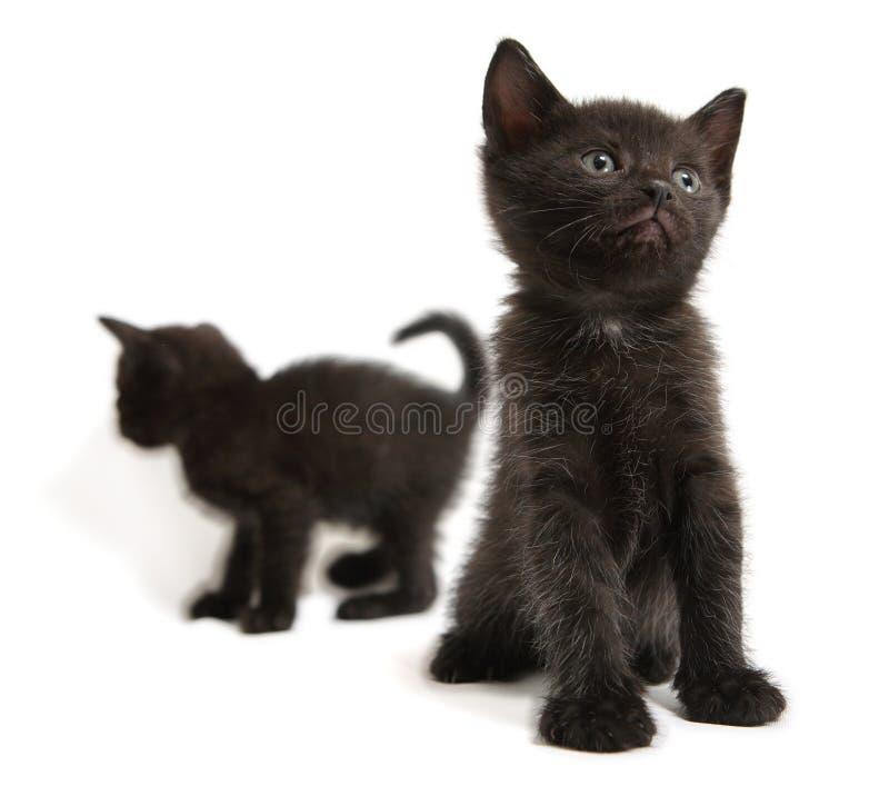Download Kitten stock image. Image of eyes, mammals, portrait, animals - 1725135