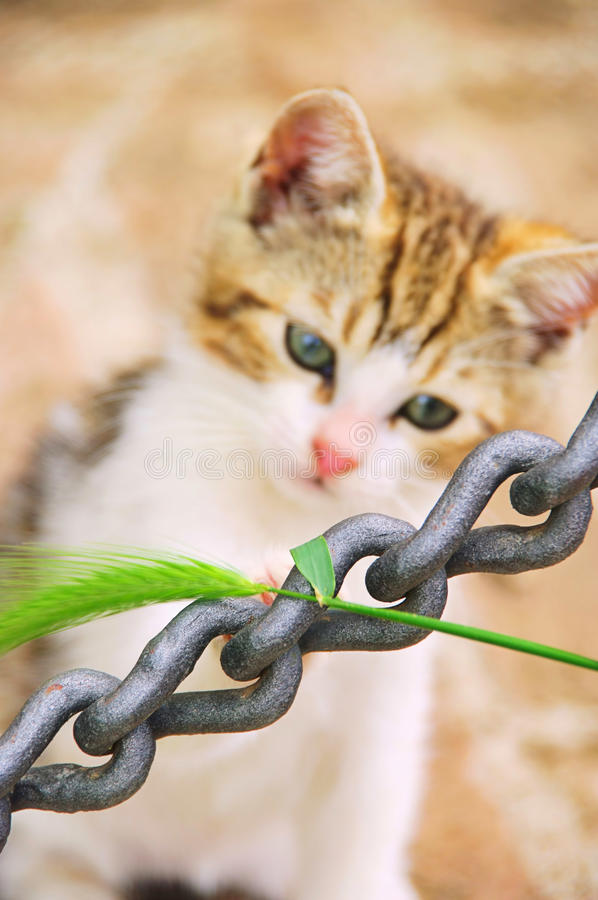 Download Kitten stock image. Image of chain, domestic, slinking - 18112889