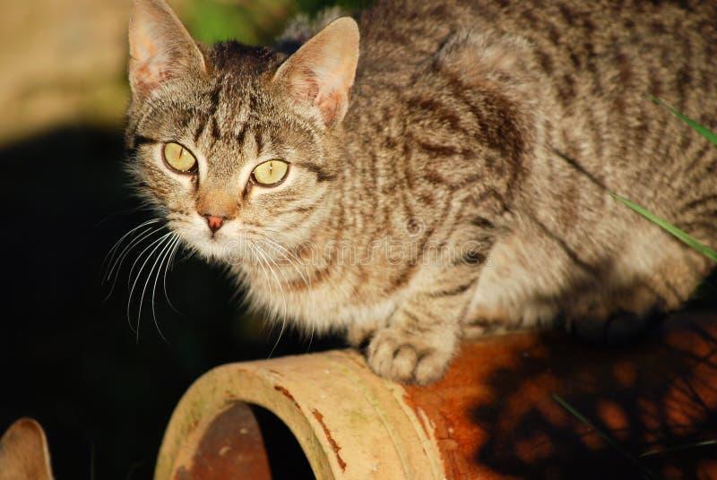 Download Kitten stock photo. Image of feline, closeup, eyes, nose - 19432768