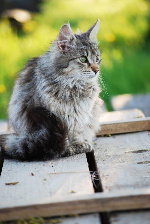 Download Kitten stock photo. Image of eyes, cute, nose, gray, kitten - 19728788