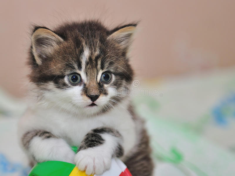 Download Kitten stock image. Image of ball, house, child, warmly - 21071479