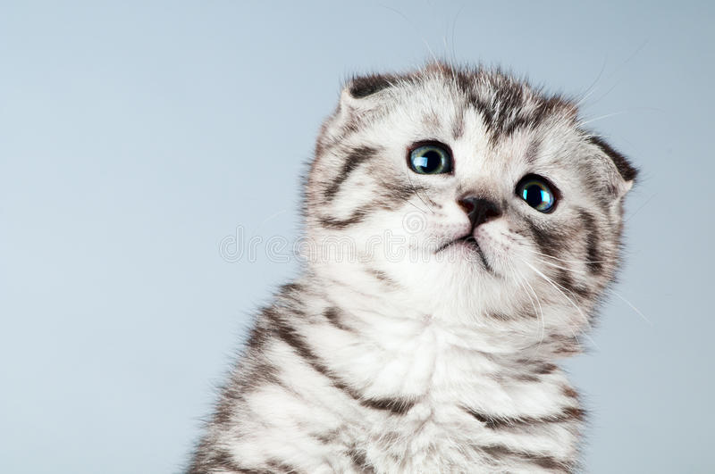 Download Kitten stock photo. Image of brindled, born, fold, face - 23123850