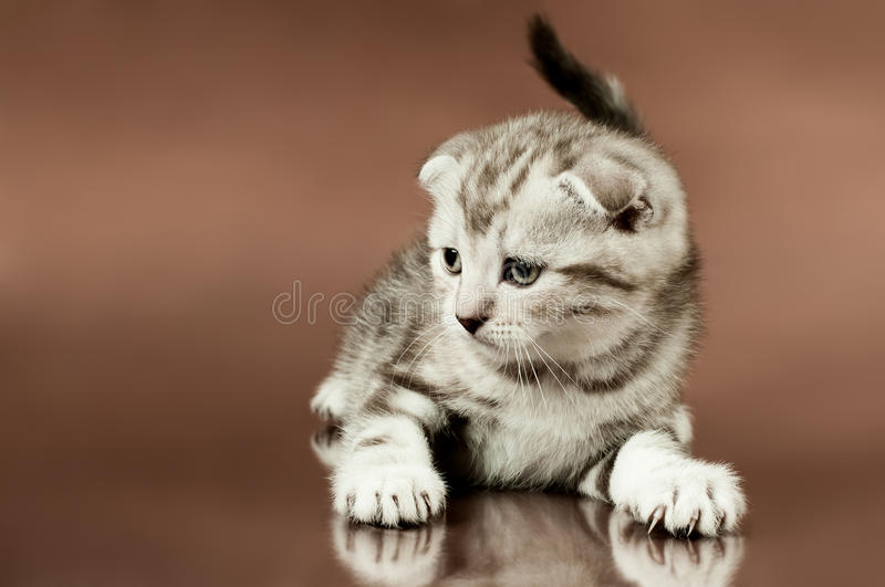 Download Kitten stock photo. Image of doleful, look, beauty, little - 23225074