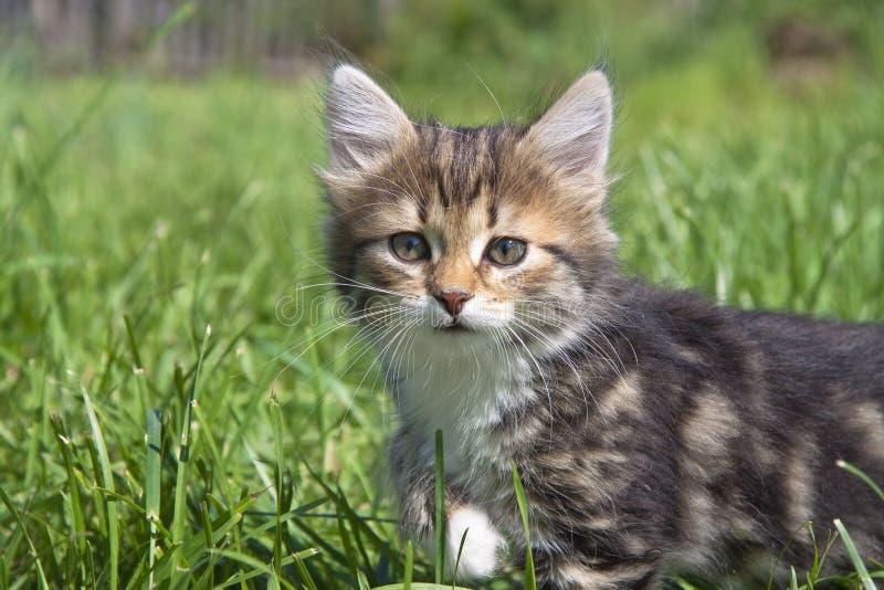 Download Kitten stock photo. Image of gaze, hair, adorable, kitten - 24643070
