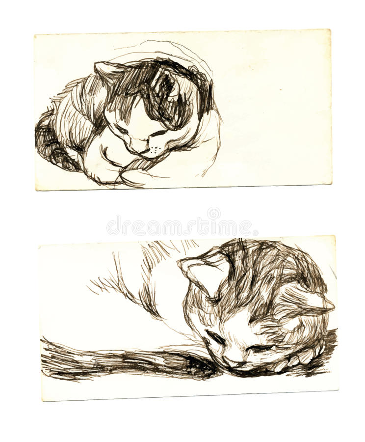Download Kitten stock vector. Illustration of sketchbook, scan - 25792437