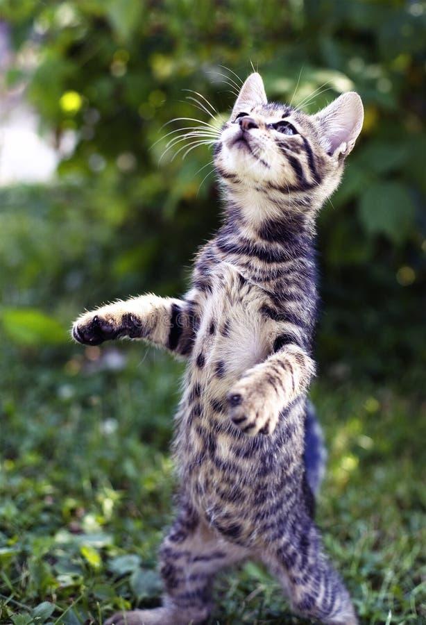 Kitten. Standing on two legs in the garden stock photos