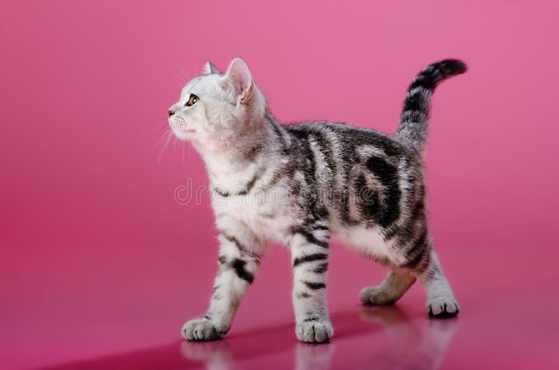 Download Kitten Royalty Free Stock Photo - Image: 25896455