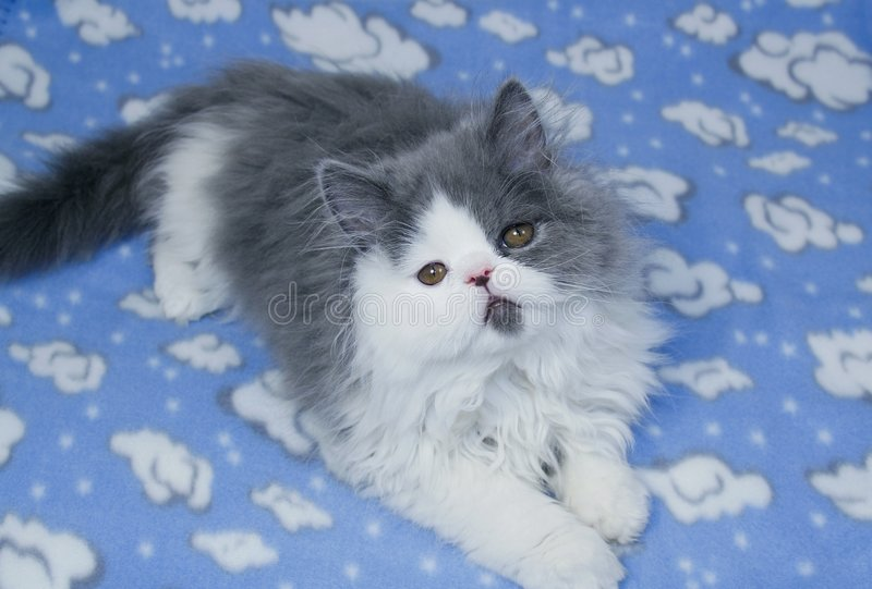 Download Kitten stock photo. Image of color, feline, white, pets - 3396614