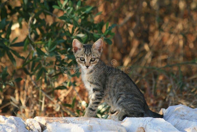 Download Kitten stock photo. Image of wall, yawn, stones, tree - 3873250