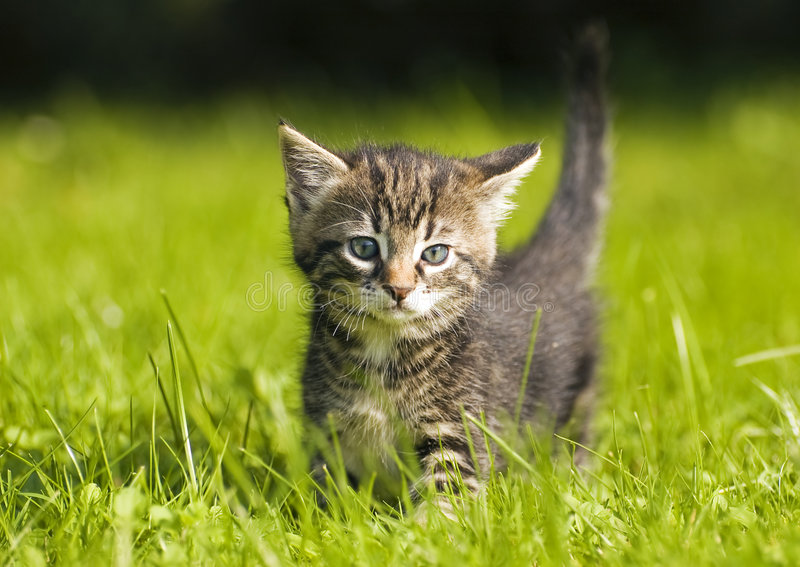 Download Kitten stock photo. Image of feline, healthy, animal, young - 5355122