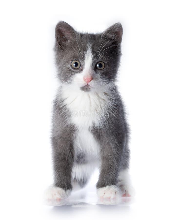 Free Kitten Royalty Free Stock Photos - 5889268