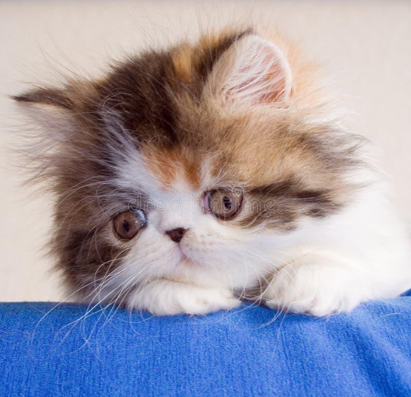 Free Kitten Stock Photography - 648022