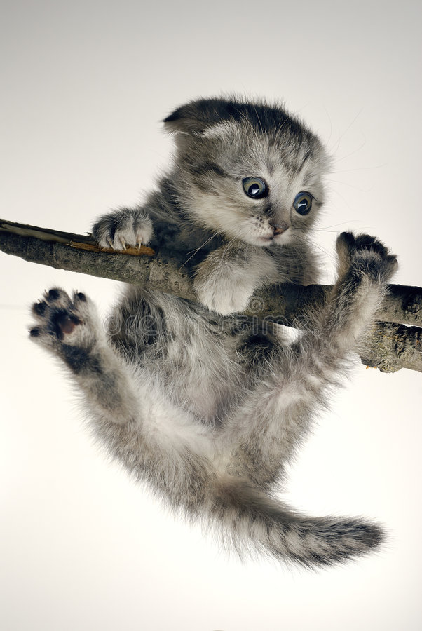 Kitten. Hangs on a tree