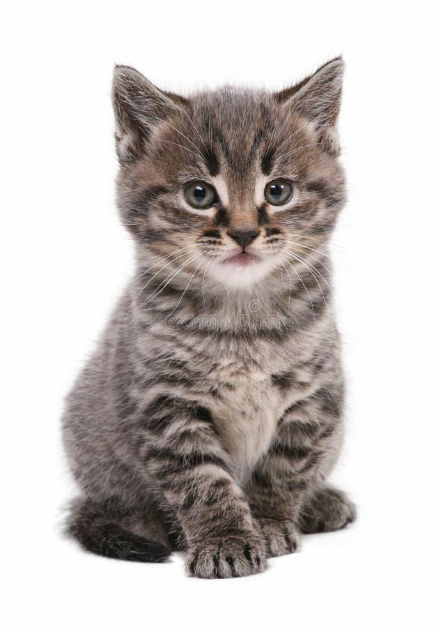 Kitten. Cute kitten isolated on a white background
