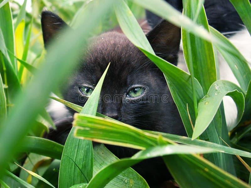 Download Kitten stock image. Image of grass, close, nose, kitten - 7395225