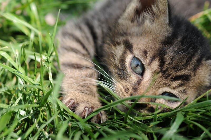 Download Kitten stock image. Image of friend, closeup, feline, angora - 9328165