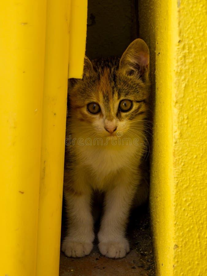 Kitten Adorável na Itália fotos de stock royalty free