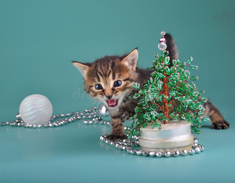 Download Kitten Against Christmas Tree Stock Image - Image: 35211981
