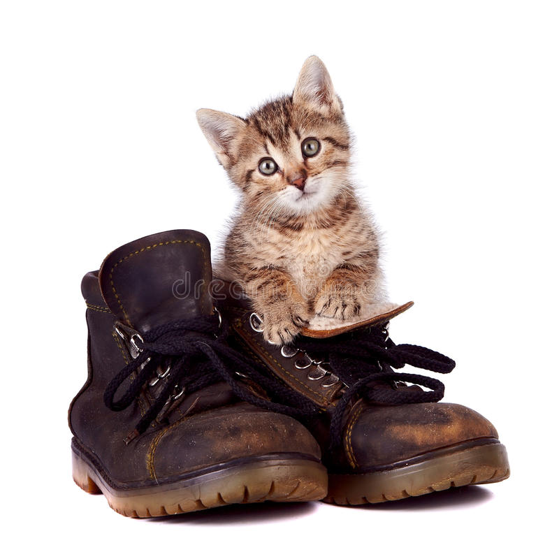 Free Kitten And Boots Stock Photos - 28148913