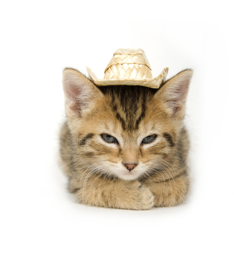 Free Kitten And Cowboy Hat Stock Photography - 2702412