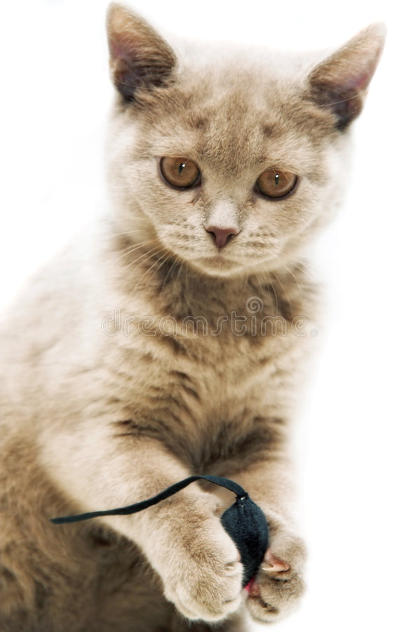 Free Kitten And Mousy Royalty Free Stock Photo - 2272485