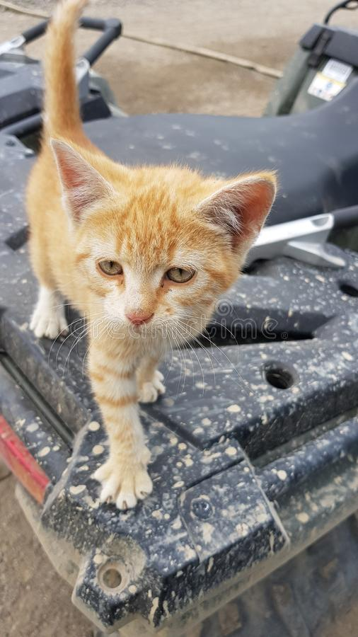 Kitten on a ATV stock image