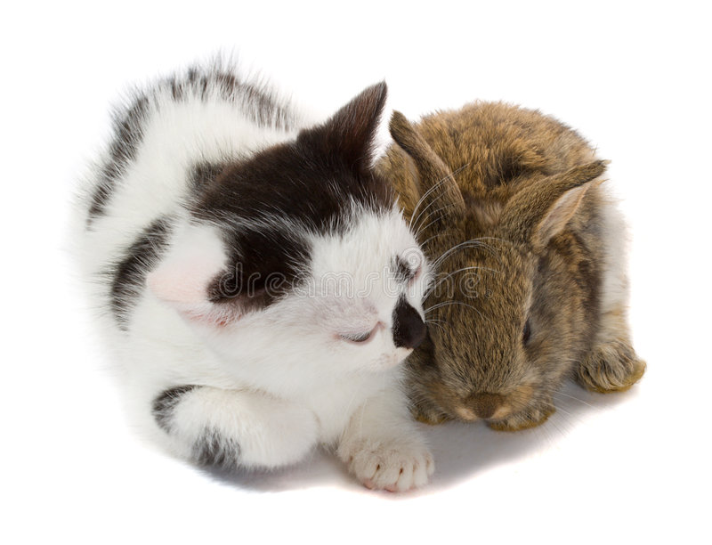 Kitten and baby rabbit. Close-up kitten and baby rabbit, isolated on white stock images