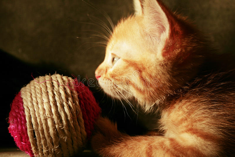 Kitten And Ball Royalty Free Stock Photography