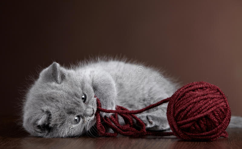 Kitten and ball of yarn stock photo