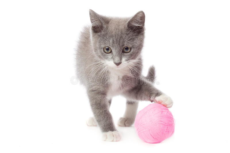 Kitten with a ball of yarn stock images