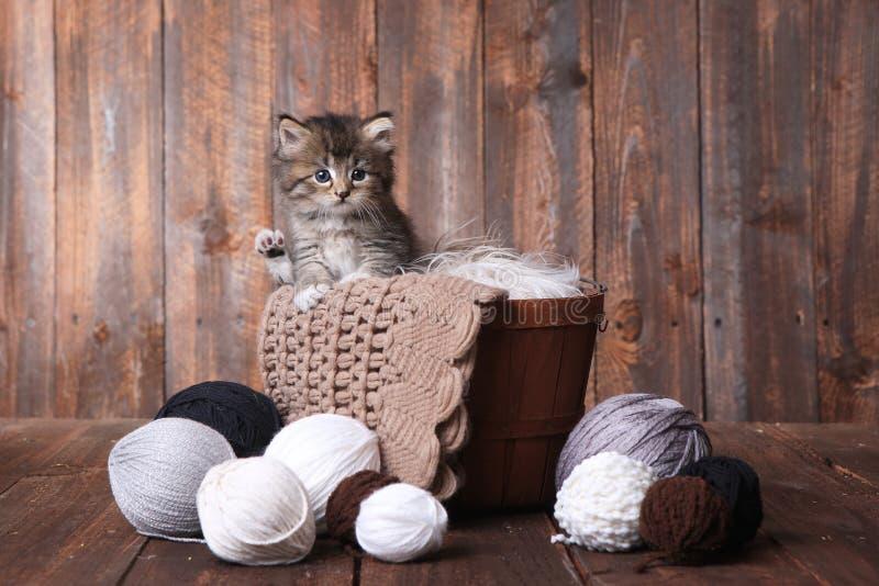 Kitten With Balls mignonne de fil photographie stock libre de droits
