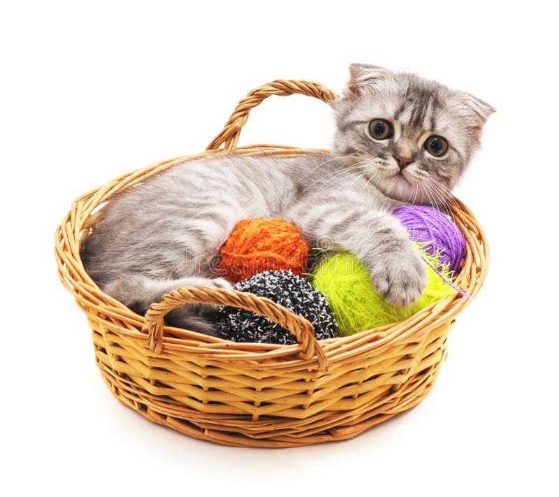 Kitten with balls of yarn in the basket. stock photography