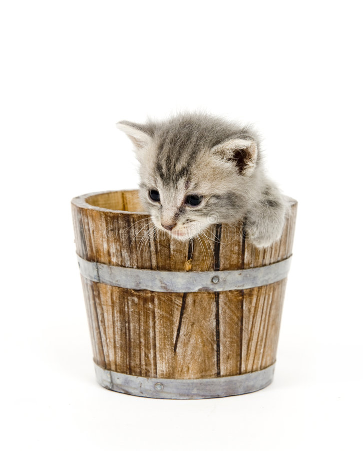 Kitten in a barrel royalty free stock images