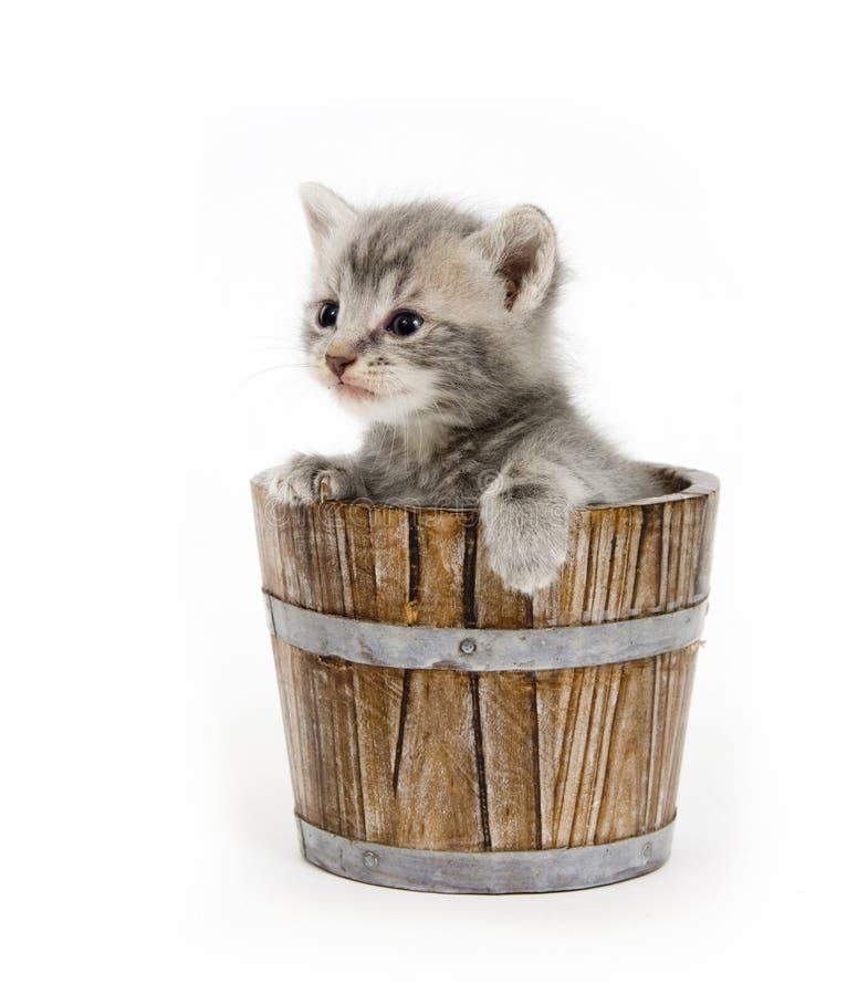Kitten in a barrel stock photos