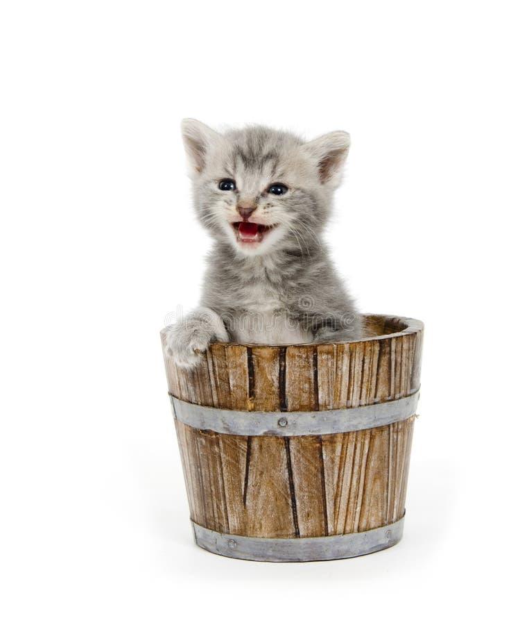Kitten in a barrel royalty free stock photos