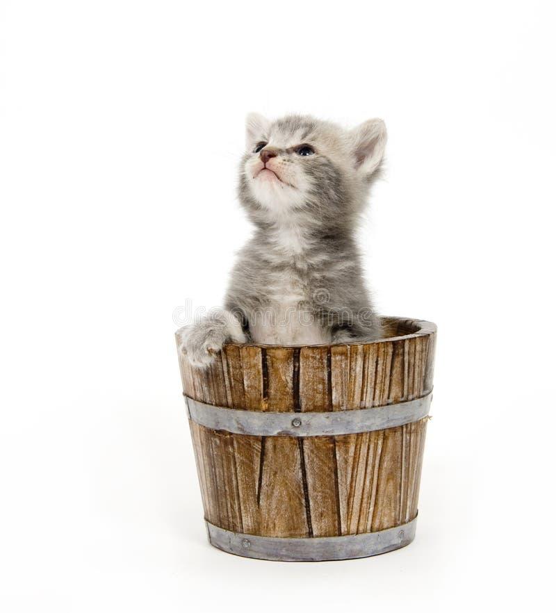 Kitten in a barrel stock image