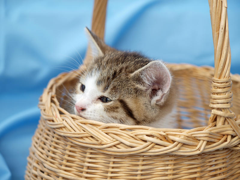 Kitten in basket stock photo
