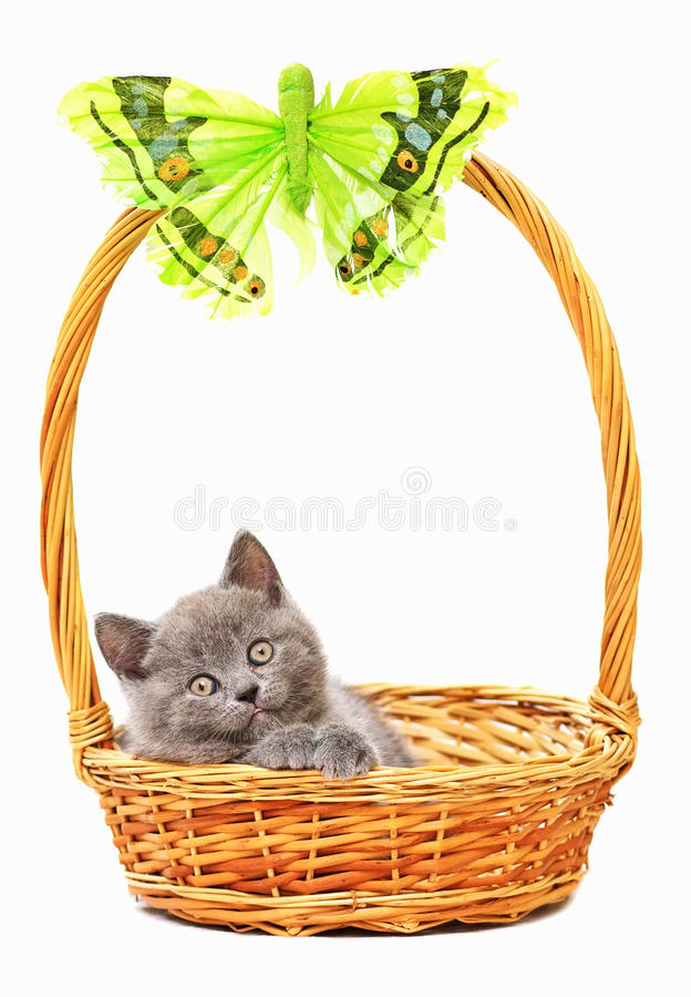 Download Kitten in a basket stock image. Image of young, isolated - 25196665