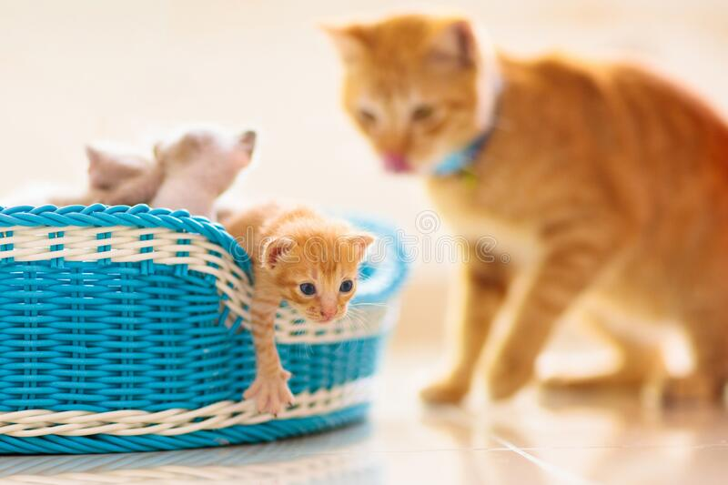 Kitten in a basket. Baby cat at home stock images